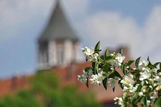 Kraków Kwiatki Wawel